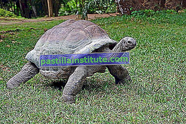 Liste des tortues