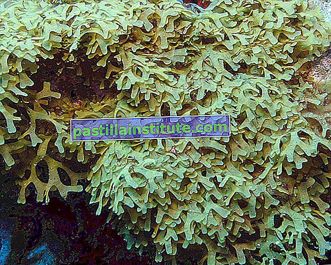 Список водоростей