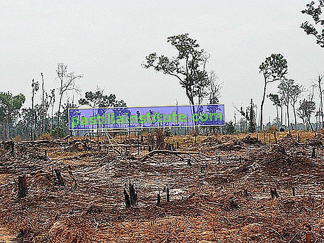 Лісозаготівля