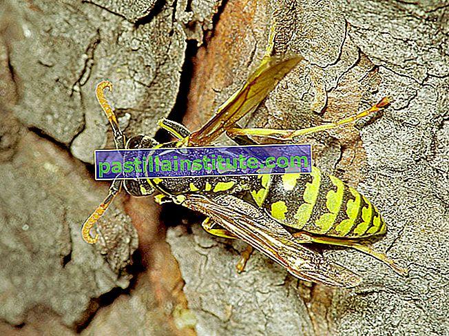 Liste des fourmis, abeilles et guêpes