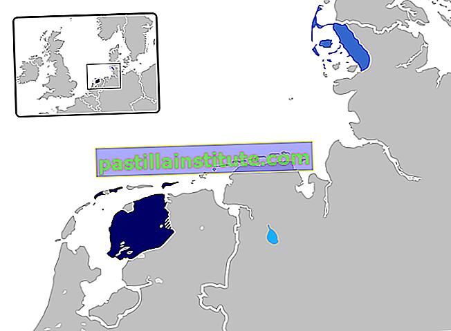 Frisian