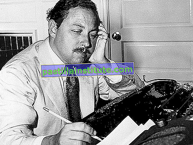 Amerikansk dramatiker Tennessee Williams, 1955.