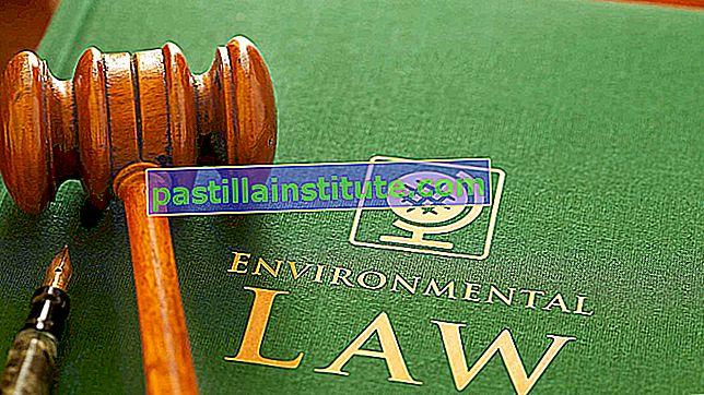 Luật môi trường
